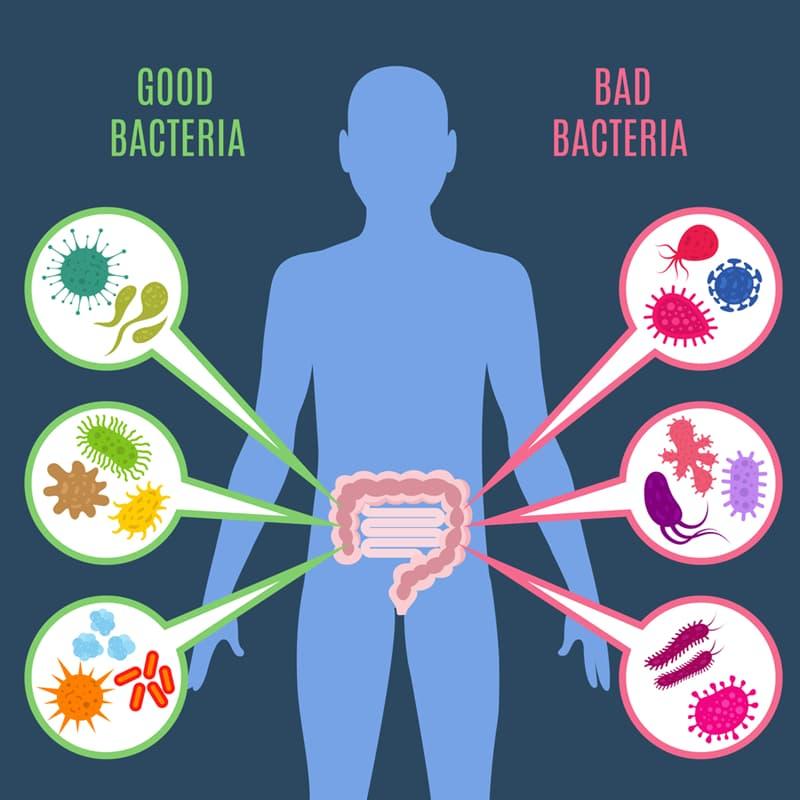 health Story: #7 Take probiotics