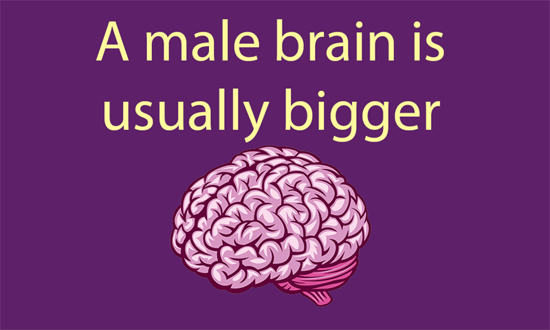 Science Story: A male brain is usually bigger