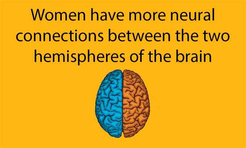 Science Story: Women have more neural connections between the two hemispheres of the brain