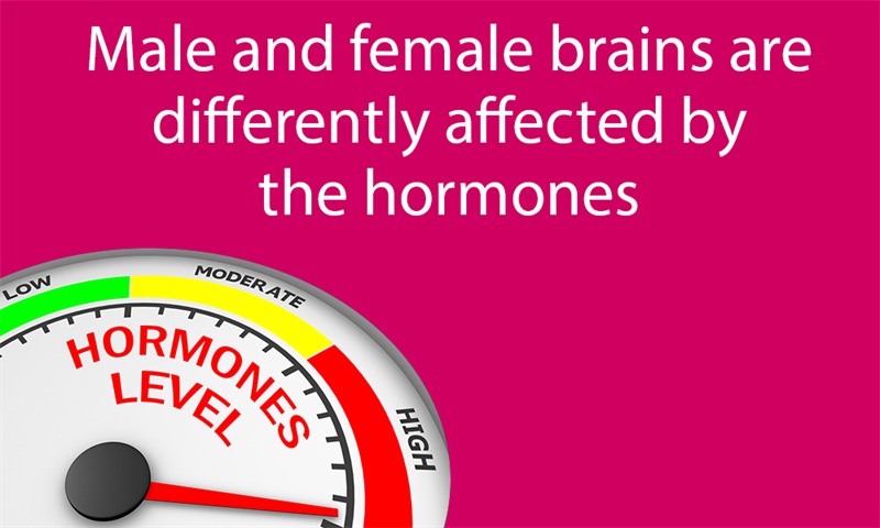 Science Story: Male and female brains are differently affected by the hormones