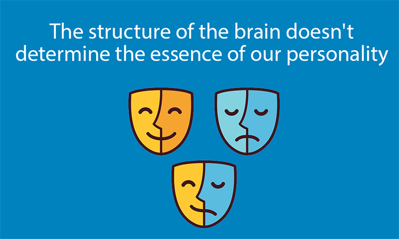 Science Story: The structure of the brain doesn't determine the essence of our personality