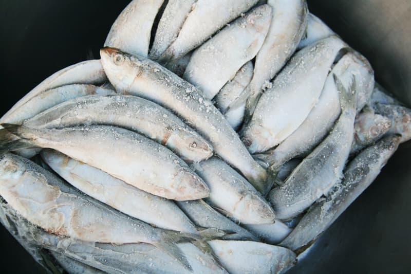 health Story: #2 Frozen or fresh fish?