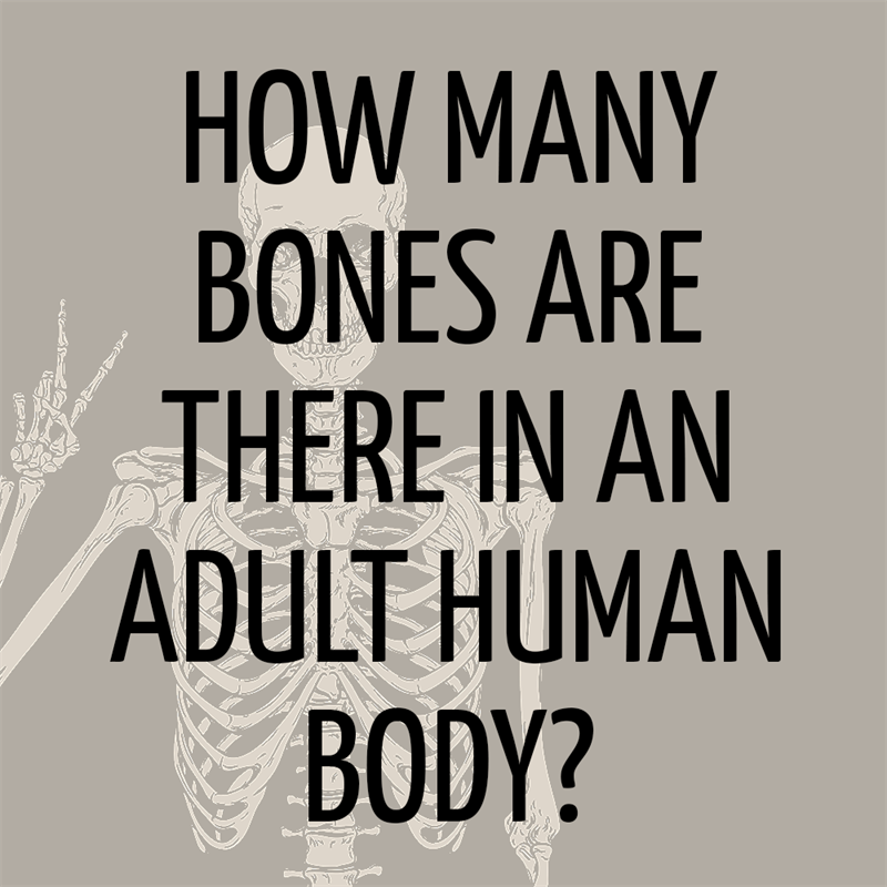 Science Story: How many bones are there in the adult human body?