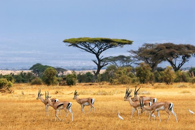 Culture Story: #2 Africa is a hot desert