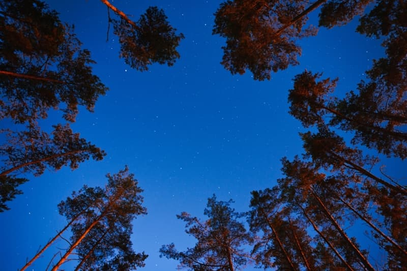 Geography Story: #5 There are more trees on our planet than there are stars in the Milky Way