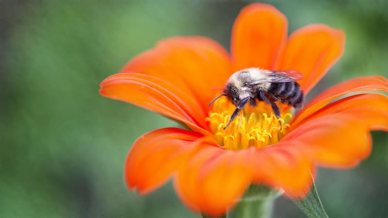 Science Story: #2 Are bees busy?