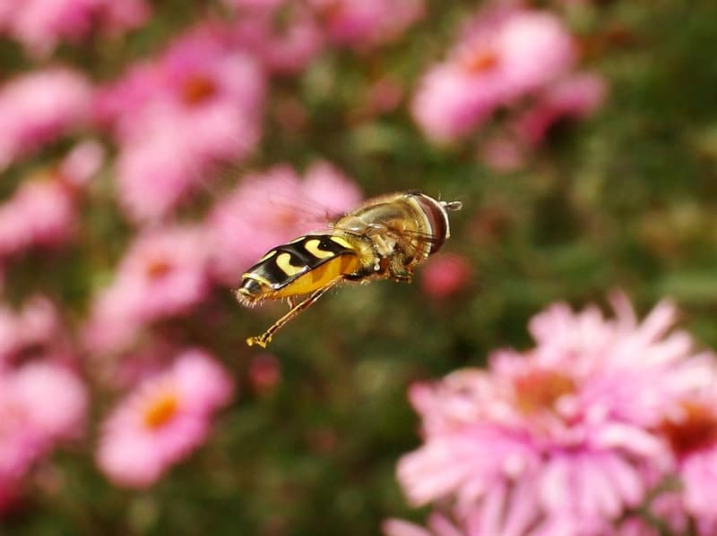 Science Story: #3 Honey bees fly at speeds up to 15 miles per hour!