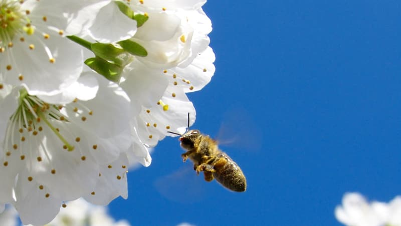 Science Story: # 5 A bee can visit 2,000 flowers per day