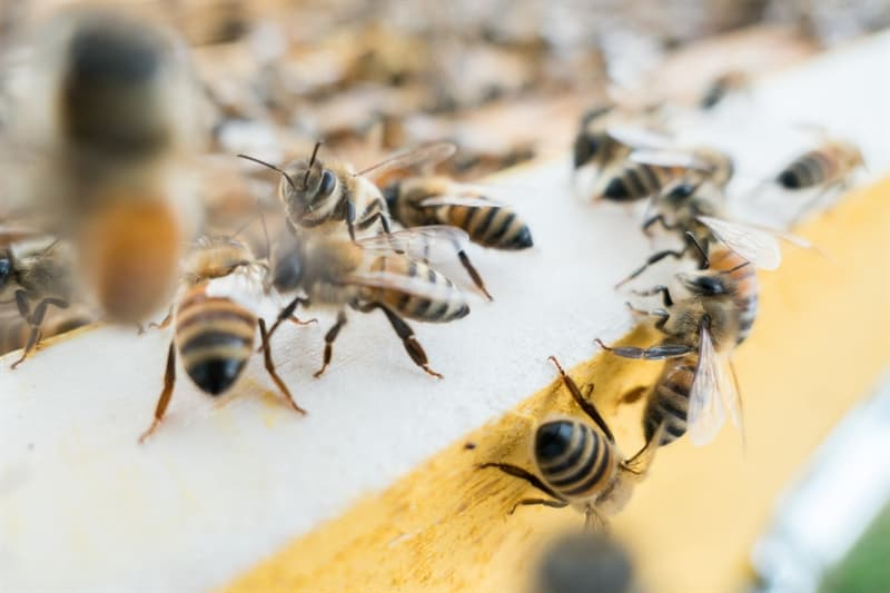Science Story: #6 How do bees communicate?