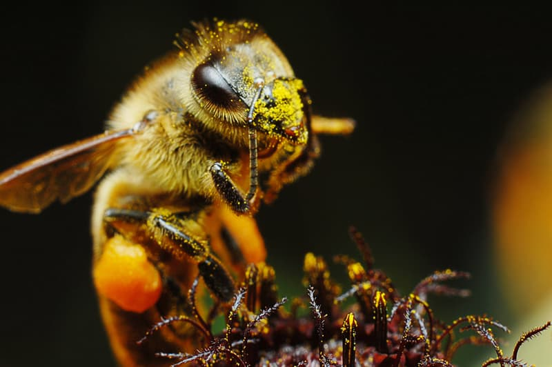 Science Story: #7 What would happen if bees disappeared?