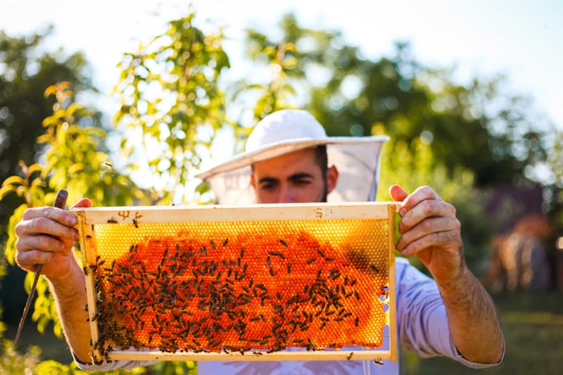Science Story: #8 Bees can tell us apart