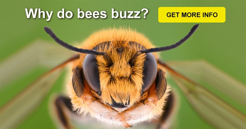 Science Story: Some unBEElievable facts about bees