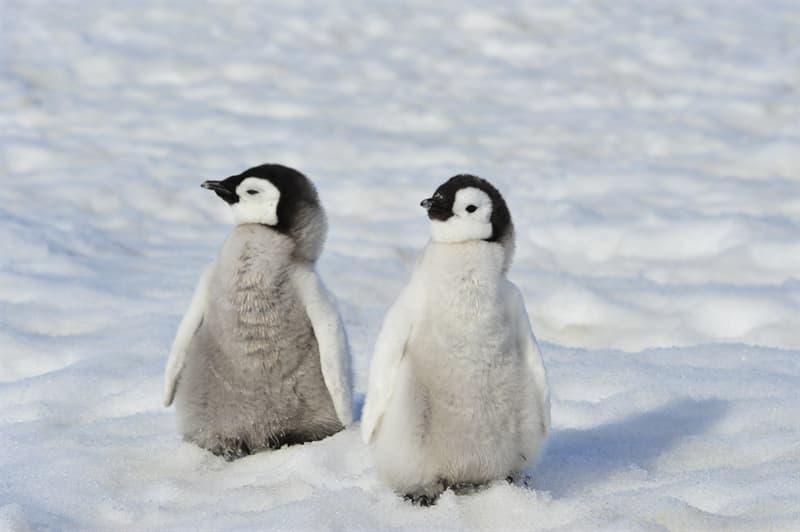 animals Story: Baby penguin