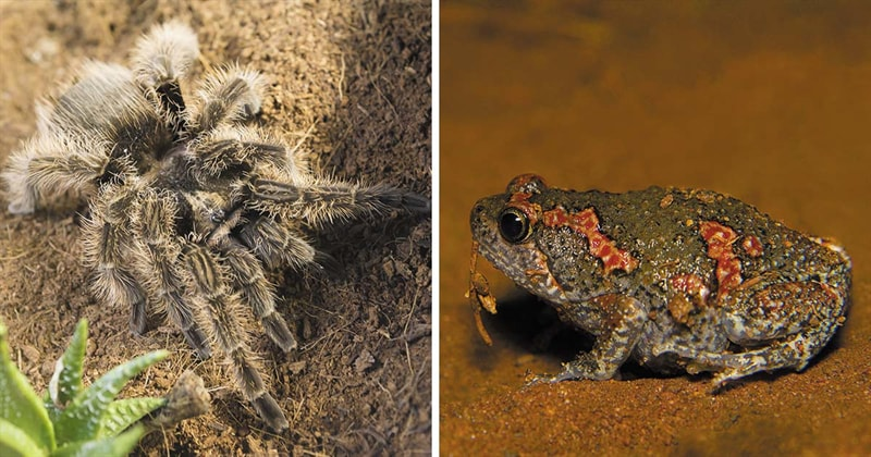Nature Story: #4 Spiders and frogs are friends. Really?!