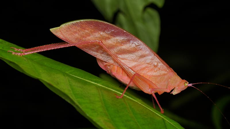 animals Story: Animals in pink: the most unexpected beauty of nature