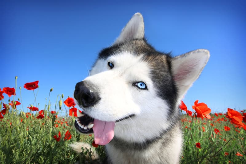 animals Story: #8 The only colors, except white and black, that dogs can see are blue and yellow