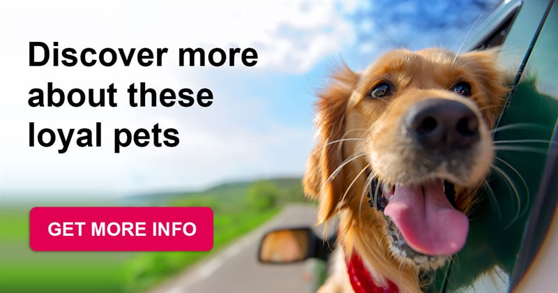 animals Story: Dogs: get to know them better with our incredible facts about these sweet pets!
