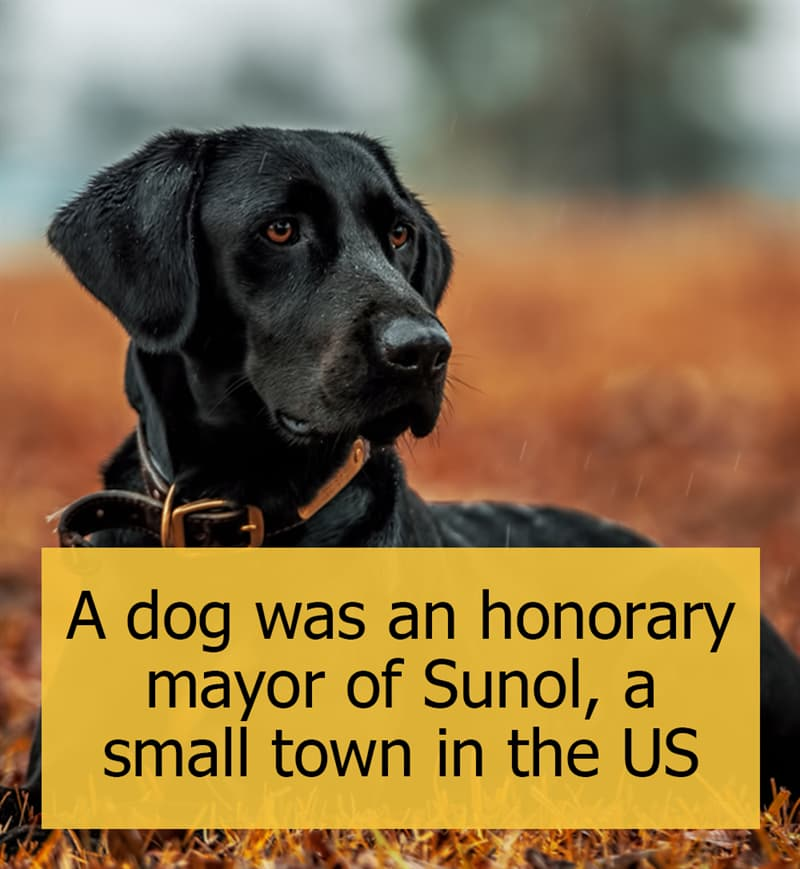 Culture Story: A dog was an honorary mayor of Sunol, a small town in the US