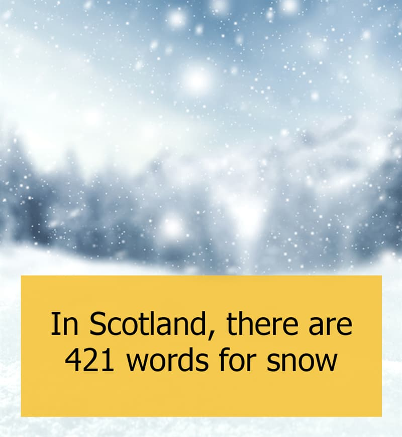 Culture Story: In Scotland, there are 421 words for snow