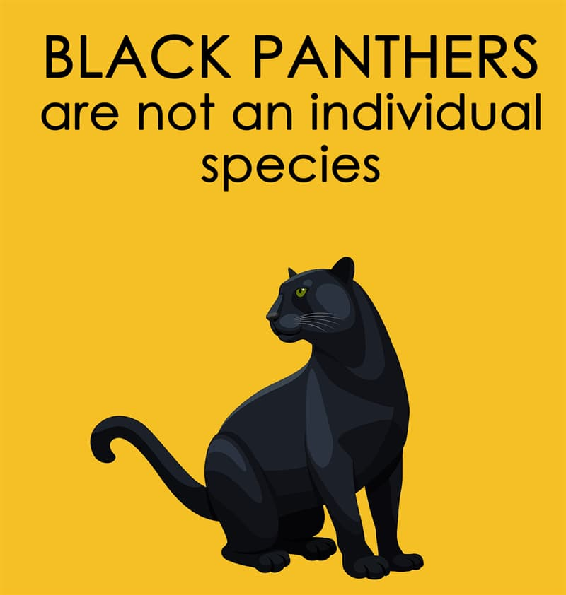 Nature Story: Black panthers are not an individual species