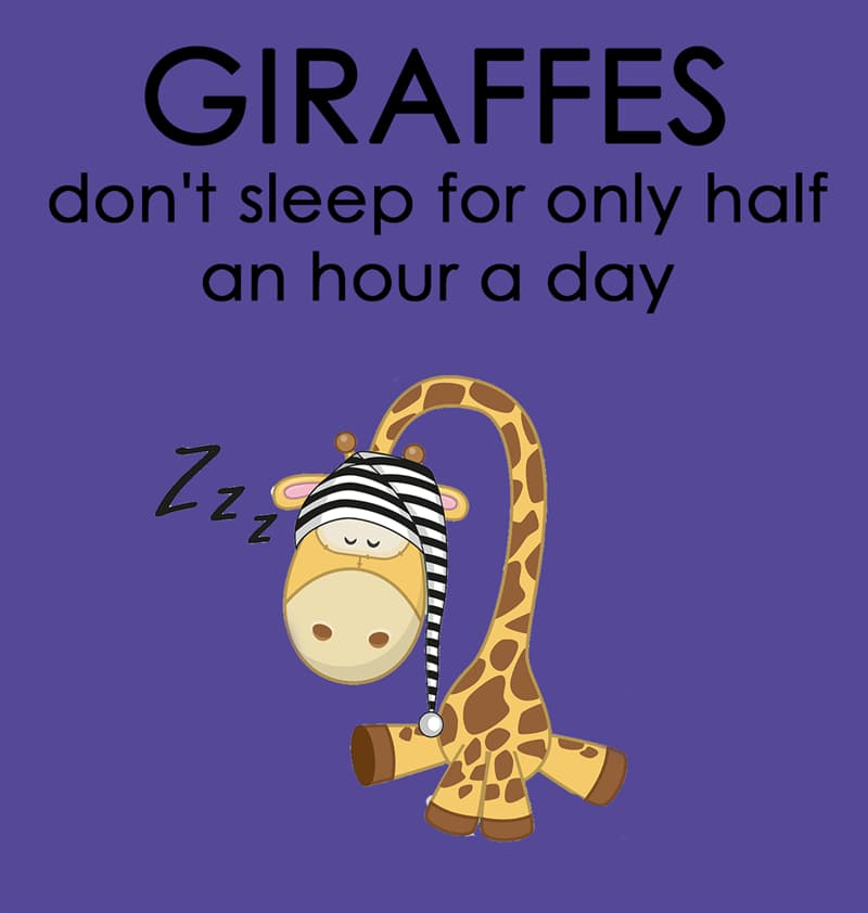 Nature Story: Giraffes don't sleep for only half an hour a day