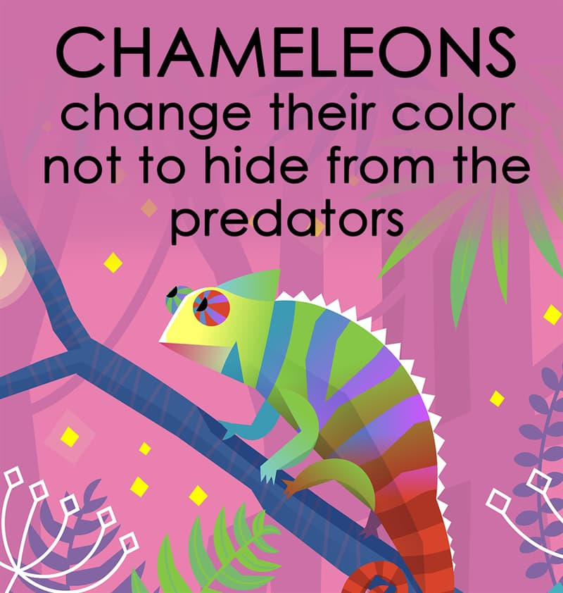 Nature Story: Chameleons change their color not to hide from the predators