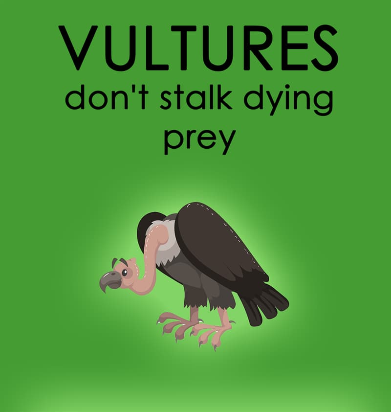 Nature Story: #7 Vultures don't stalk dying prey