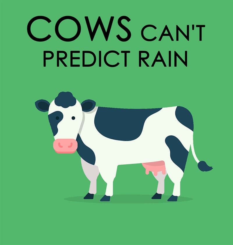 Nature Story: Cows can't predict rain