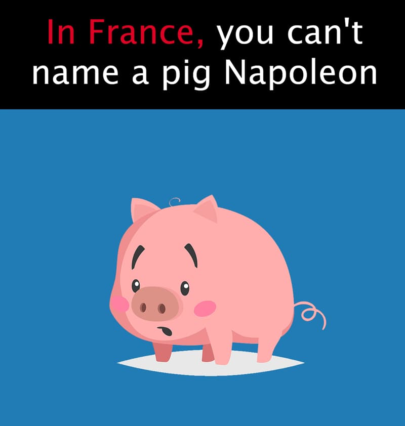 """Geography Story: In France, you can't name a pig """"Napoleon"""""""
