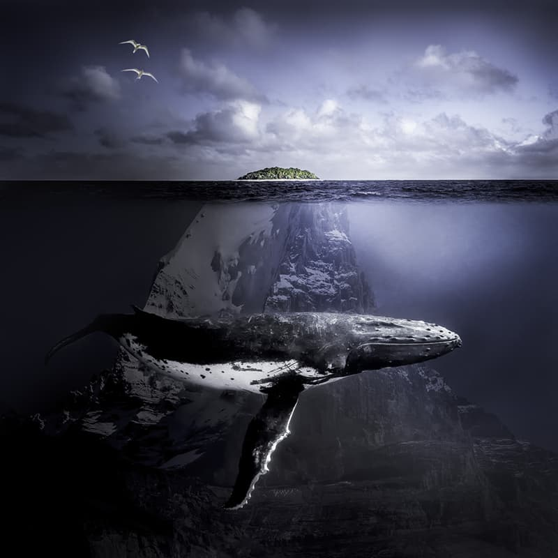 Geography Story: #5 A Whale's Tale