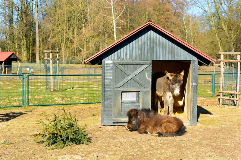 animals Story: 16 miniature donkeys that will definitely win your heart #11