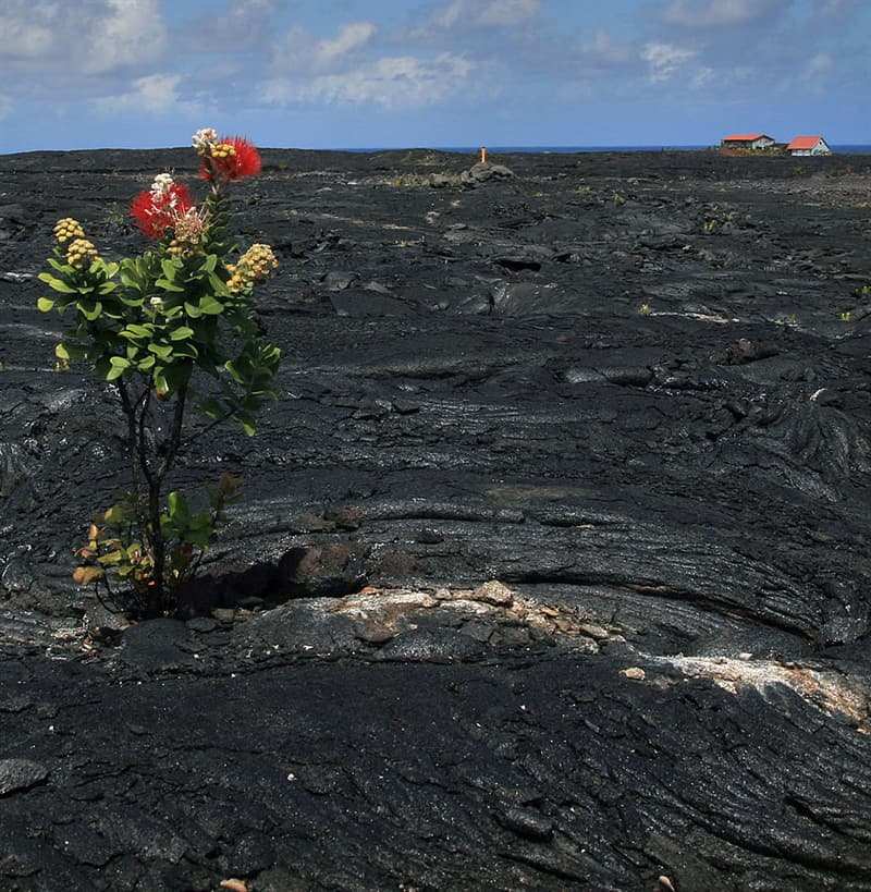 animals Story: #10 A flower growing through lava