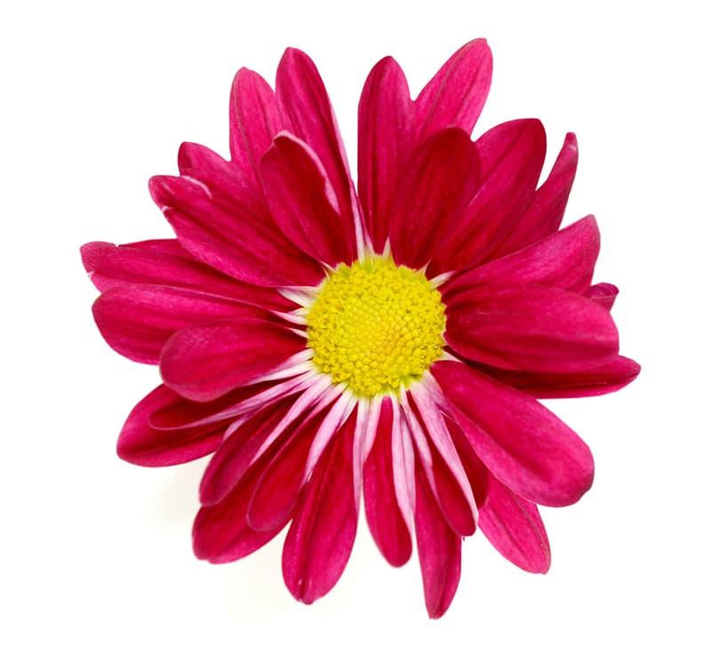 Society Story: Flower #1