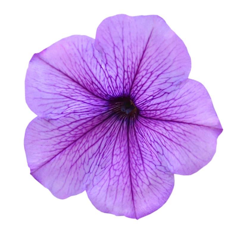 Society Story: Flower #3