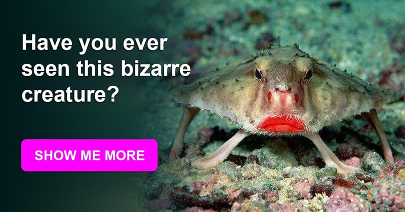 Science Story: The most fabulous creatures that actually exist!