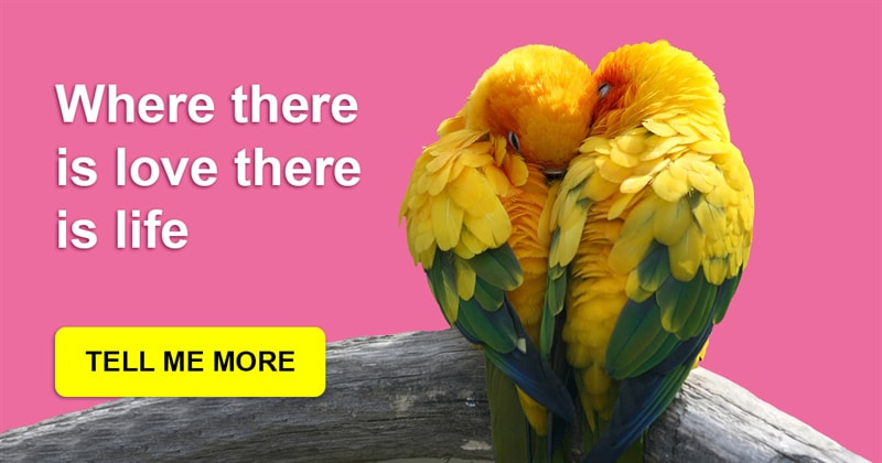 animals Story: These amazing parrots show what a true love is