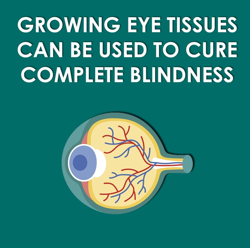 Science Story: Growing eye tissues can be used to cure complete blindness