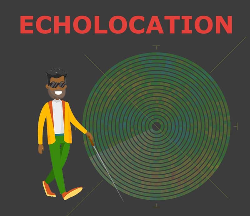 Society Story: Echolocation