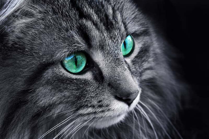 Nature Story: #2 Cat's vision