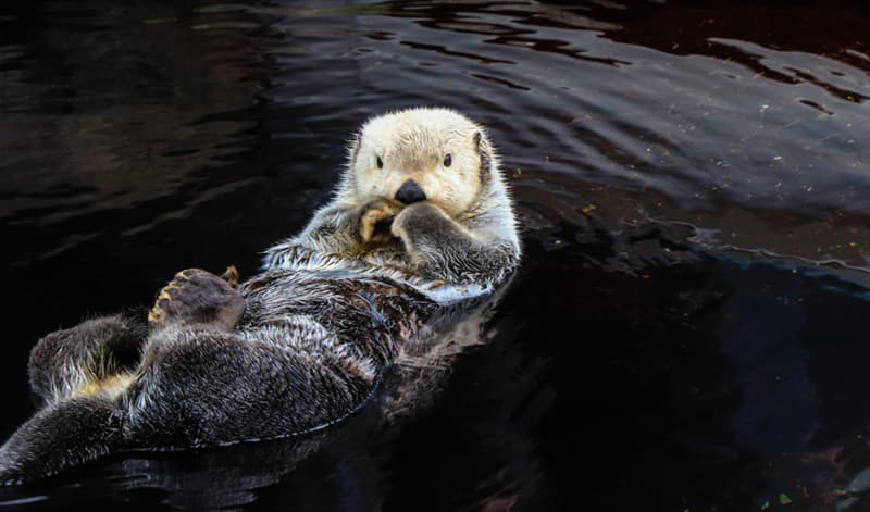 Geography Story: #10 Otters