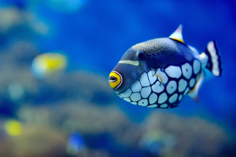 Science Story: Do fish feel thirst?