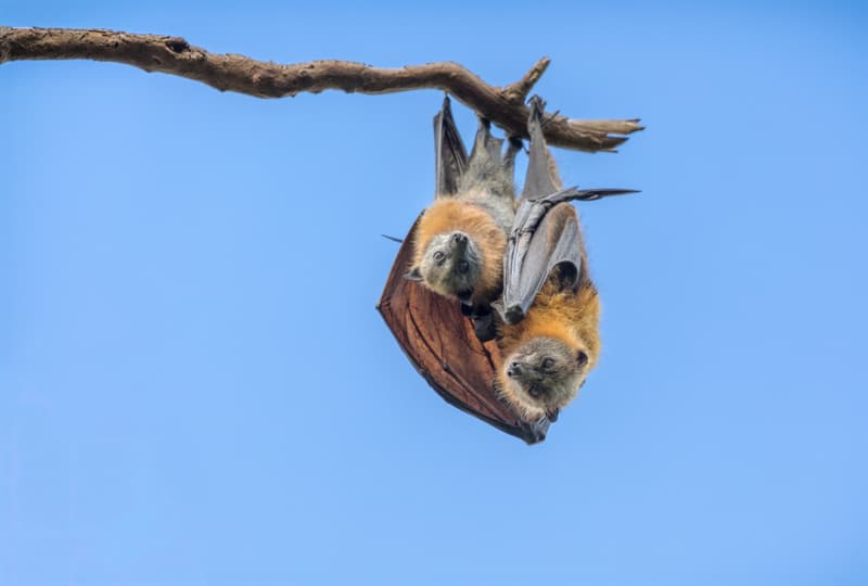animals Story: Why do bats sleep upside down?