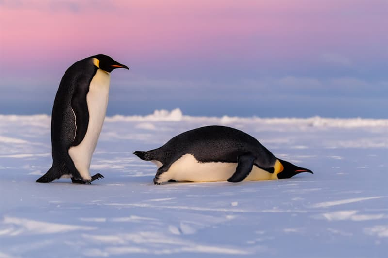 Geography Story: #4 Emperor Penguins