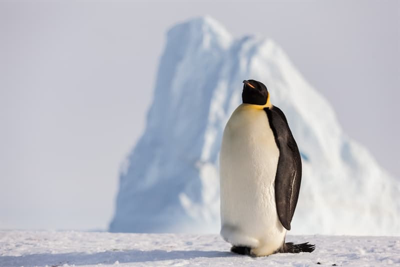 Geography Story: #5 Emperor Penguin