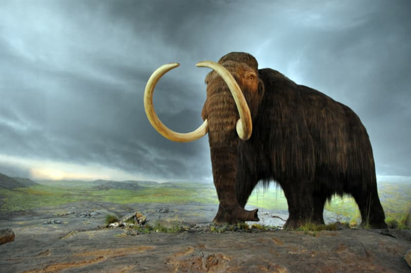 Geography Story: #3 The woolly mammoths and the Great Pyramid ofGiza