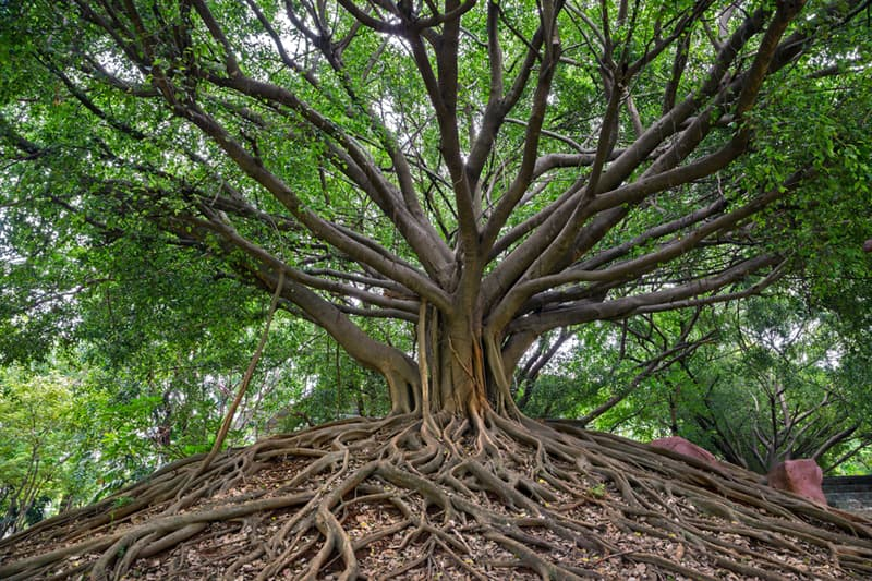 Geography Story: #2 Tree roots