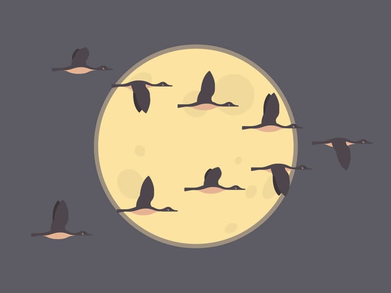 Nature Story: Why do Canada geese fly at night?
