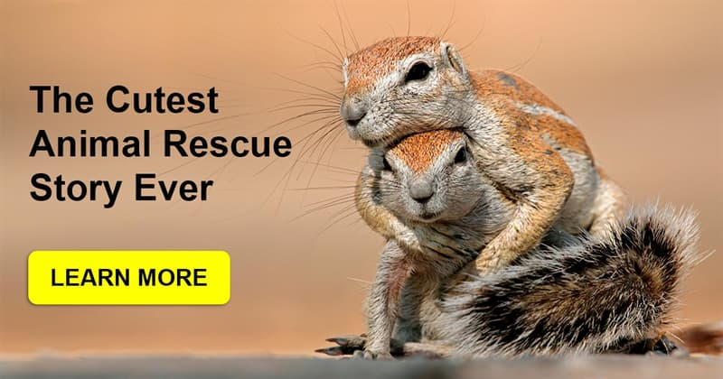 Society Story: Do animals know when someone is trying to help them?
