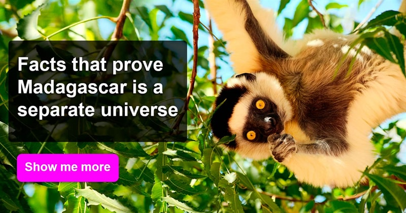 Geography Story: Facts that prove Madagascar is a separate universe