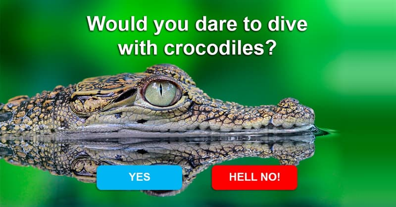 animals Story: Why is it safer to dive with sharks but not crocodiles?